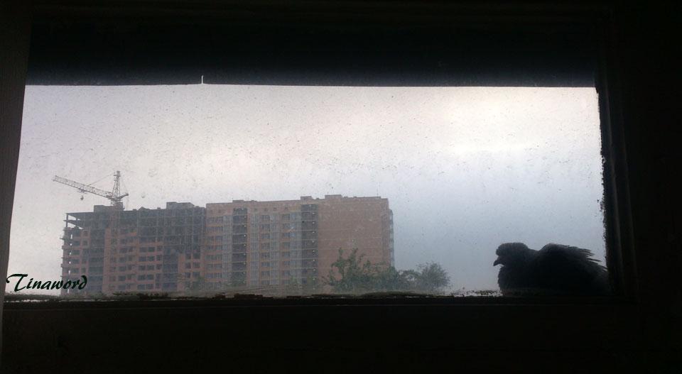 голубь-4.jpg