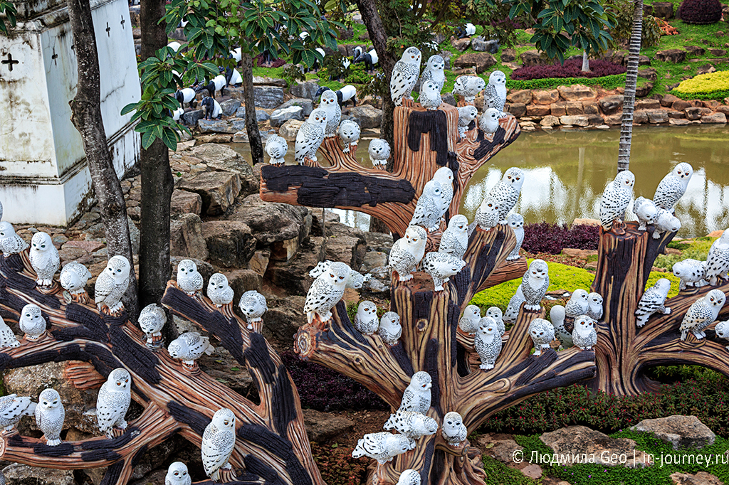 сад нонг нуч совы