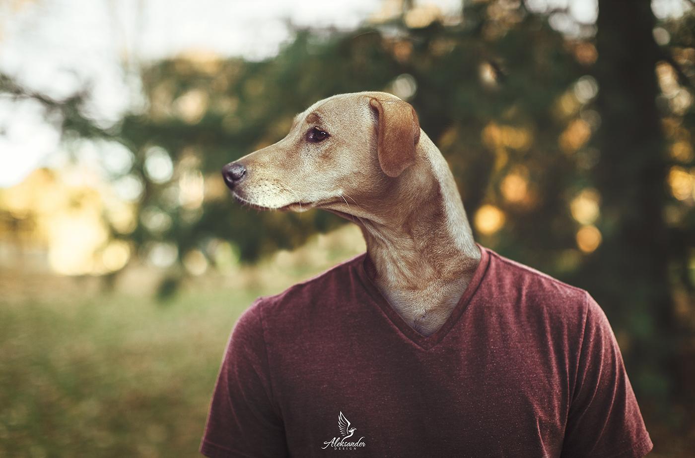 Dog Face / фото Aleksander Des