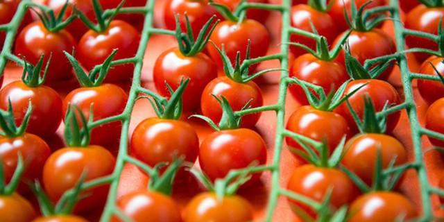 Россельхознадзор просит Беларусь прекратить реэкспорт помидоров изАфрики иАзии