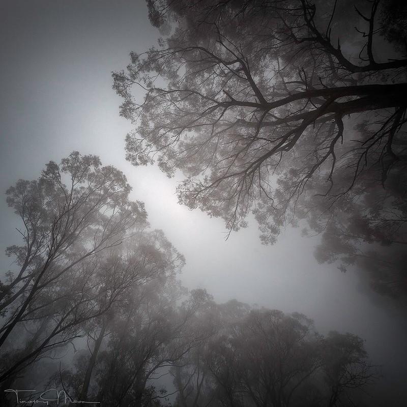 0 180340 7f19f970 orig - Божественная природа Австралии на снимках Тимоти Муна