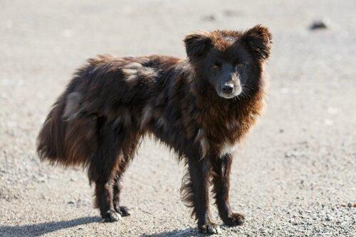 Томас Андерс и Дитер Болен собаки из приюта догпорт