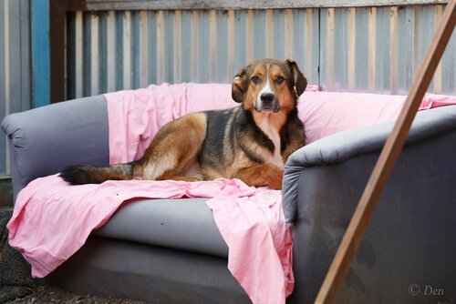 Кайзер собака из приюта догпорт