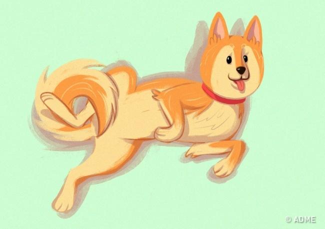 Собака показывает таким образом доверие ихочет порадовать вас. Если погладить собаку поживоту вэт