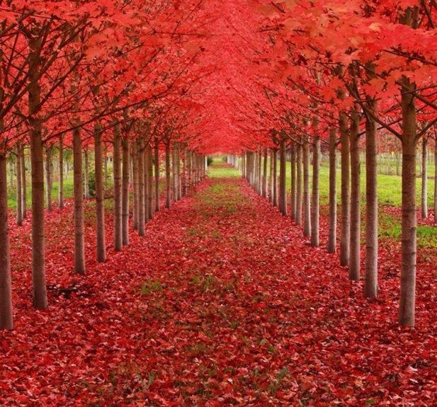 9. Ангельский дуб, находится в Южной Каролине