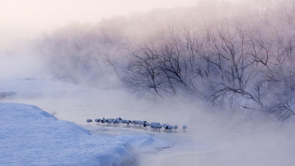 Фотографии зимы,которые помогут вам согреться (15 фото)