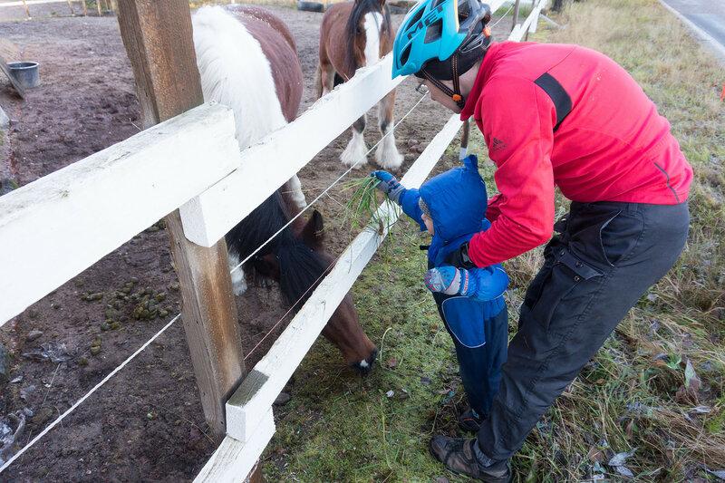 ребенок дает травку лошадям