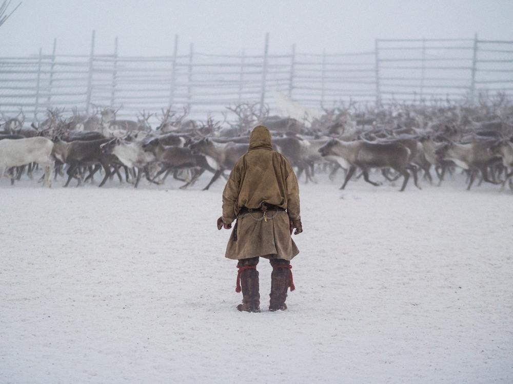 Забой оленей и теплая кровь из кружки: жизнь оленеводов на Крайнем Севере
