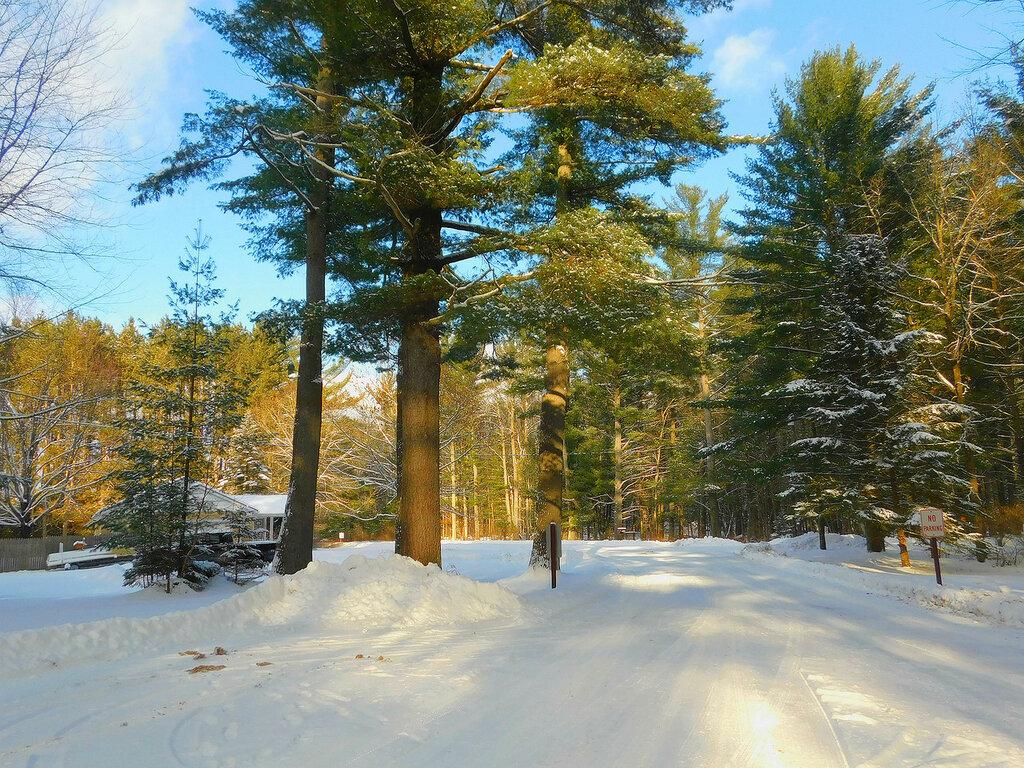 Олени в зимнем парке.