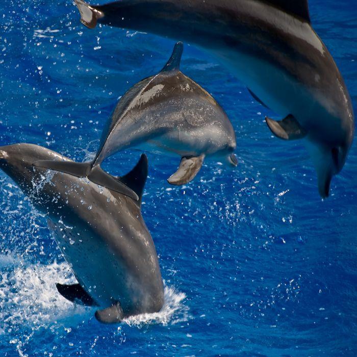 День Черного моря. Игра дельфинов открытки фото рисунки картинки поздравления