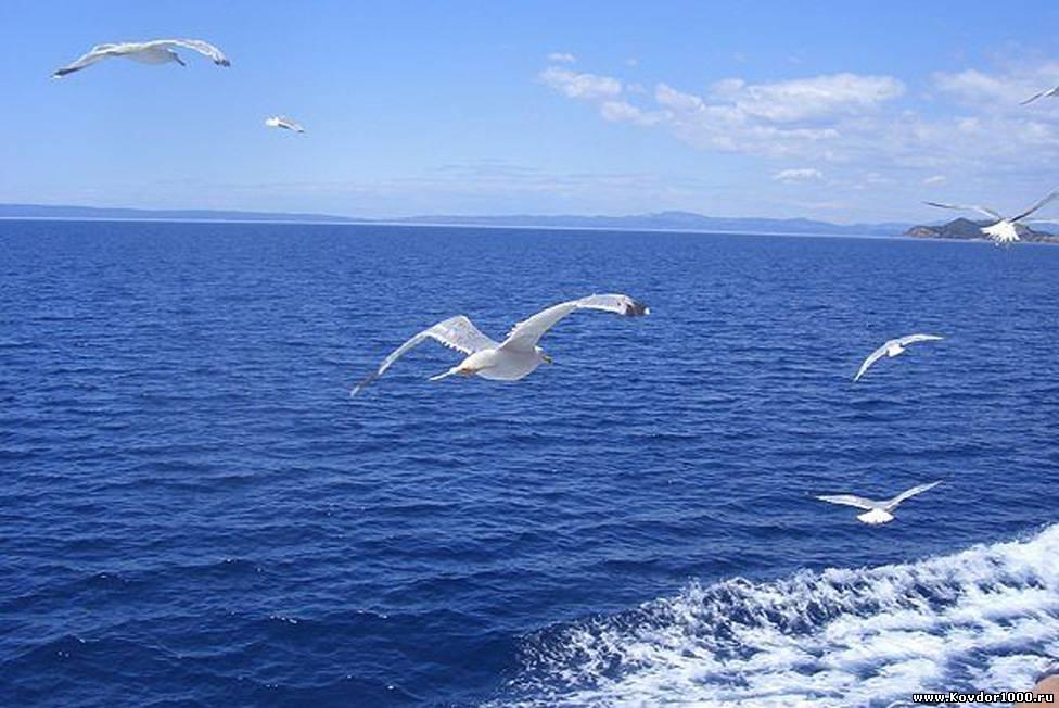 День Черного моря. Чайки