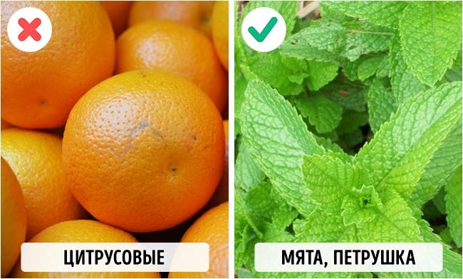 © pixabay     Цитрусовые могут вызывать рвоту идиарею. Авот зелень, наоборот, с