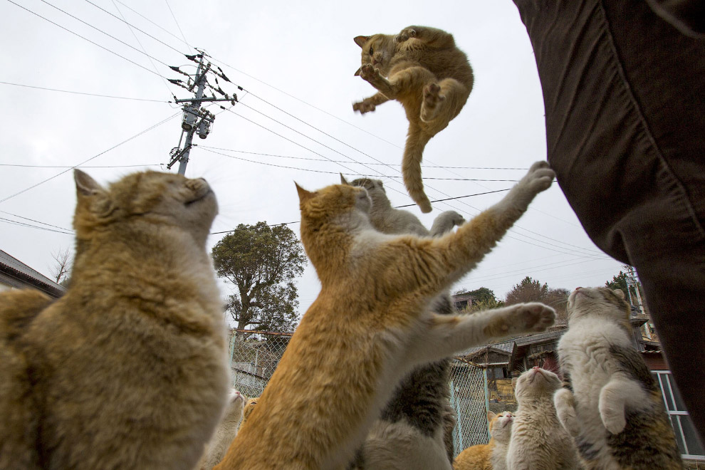 20. На пристани острова кошек Аошима, 25 февраля 2015. (Фото Thomas Peter | Reuters):