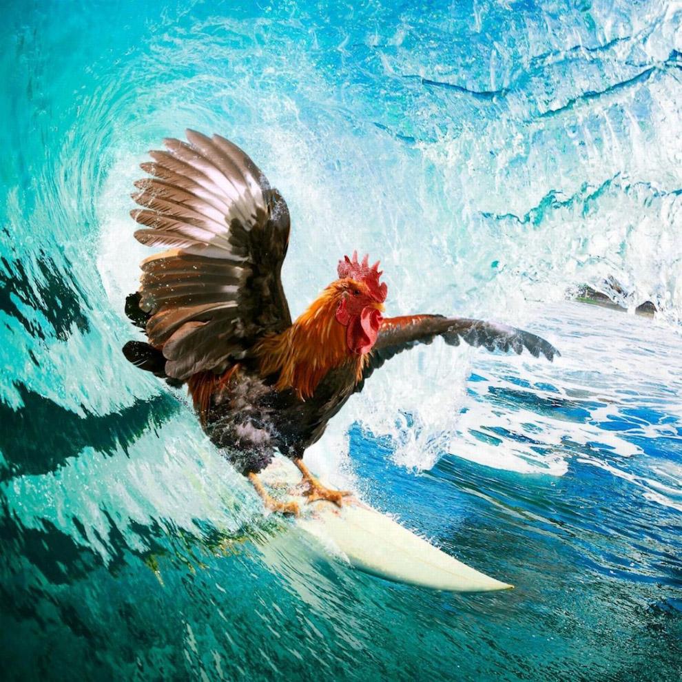 14. Крабики. Каждый год все взрослое население красных крабов на острове Рождества в Австралии, окол