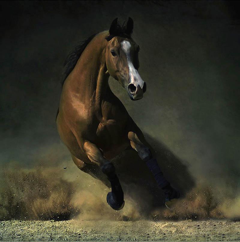 21. Арабская лошадь.  (Wojtek Kwiatkowski)