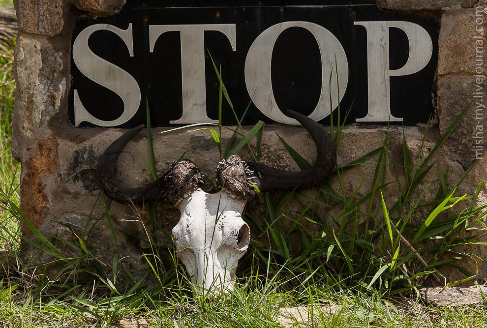 24. Во время миграции реку пересекают стада антилоп, которых пытаются ухватить сидящие в воде крокод