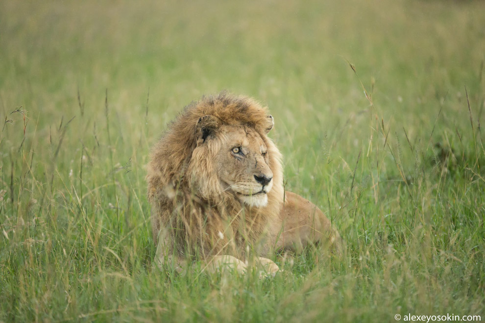 HD Африка легенды удивительное легенда удивительно животные места