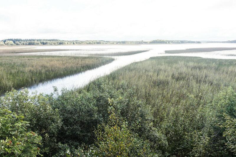 Вид с вышки для наблюдения за птицами у озера Ураярви