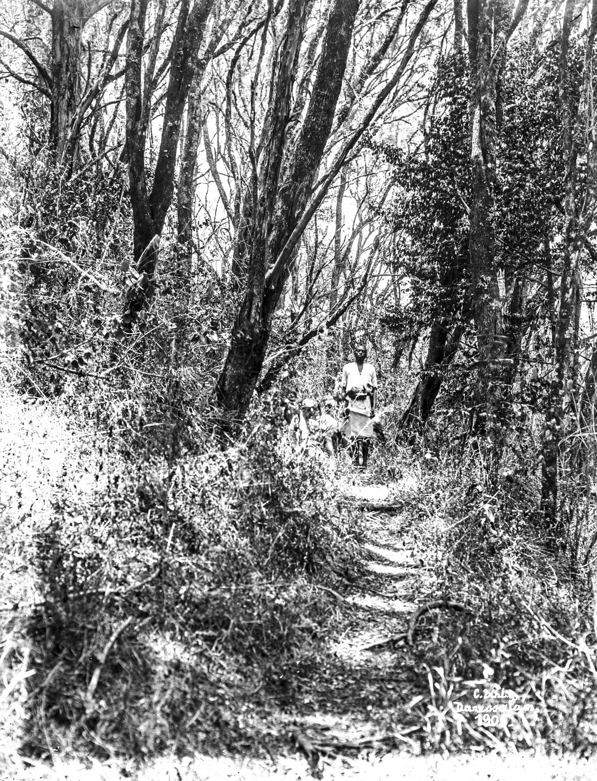 58. В лесу