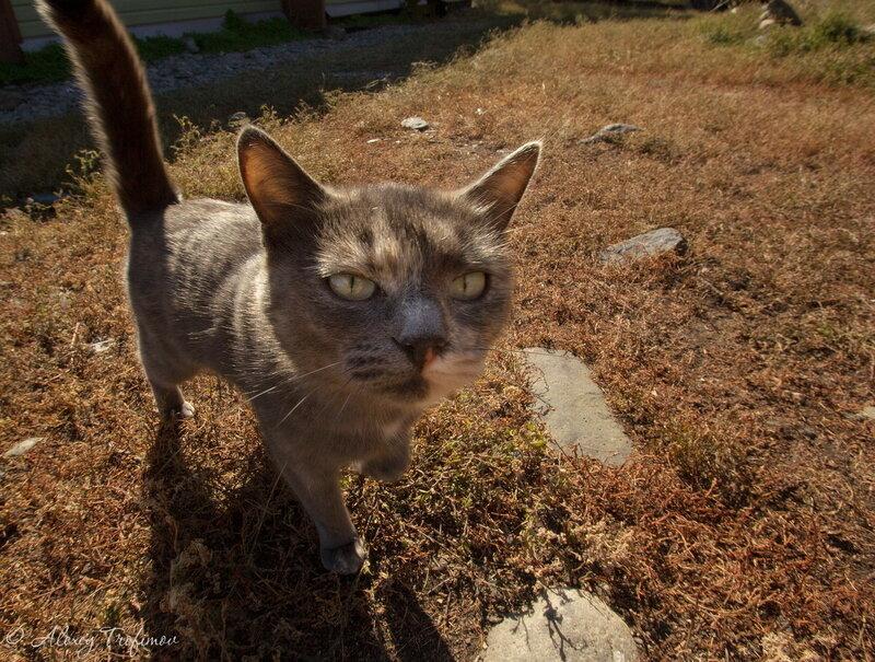 Baikal_2017_10_Cats-4.jpg