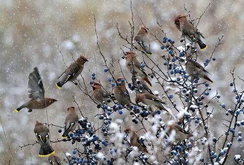 птичий аппетит крепчает, как и мороз