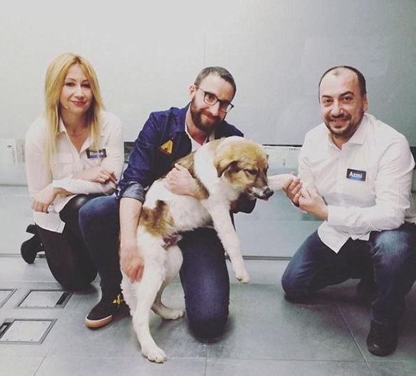 Новые хозяева Паскаля оказались испанцами. Теперь турецкий пёс живёт в Испании и обожает резвиться н