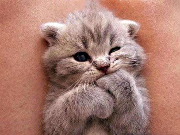 Самые милые котята на свете