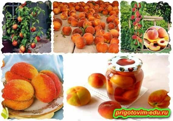 Как вырастить персики на грядке