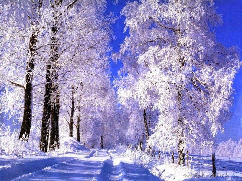 poze_iarna_de_vis_1024x768.jpg