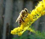 Солнечная пчелка!