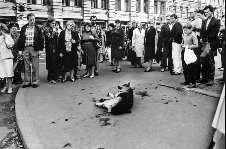 Петроградская. Собака, сбитая автомобилем