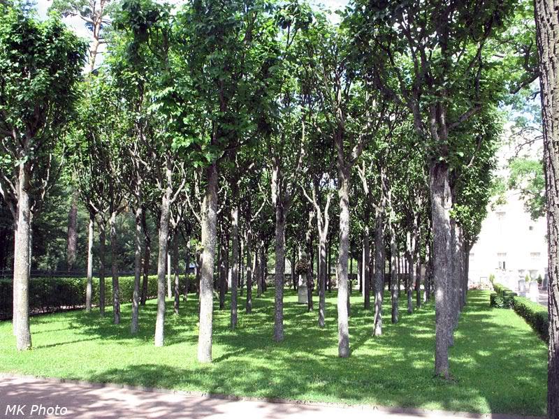 Деревья в цветнике