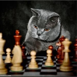 20 июля международный день шахмат открытки. Играет кот