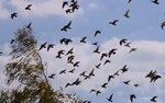 Вспорхнули птицы в облака, гонимые осенним ветром....