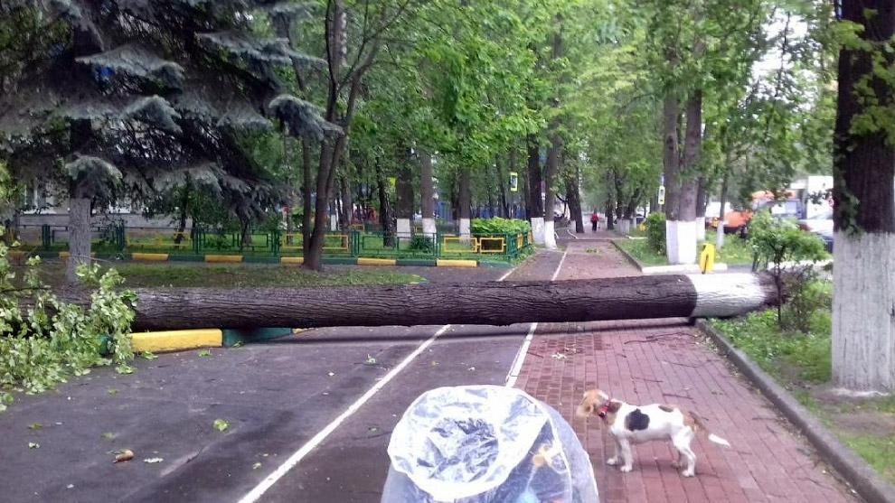 Ураган в Москве повредил автомобили, линии электропередач и железнодорожные пути. (Фото Ильи Га