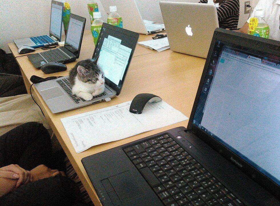 Японская IT-компания приютила в своём офисе целое полчище бездомных кошек (11 фото)