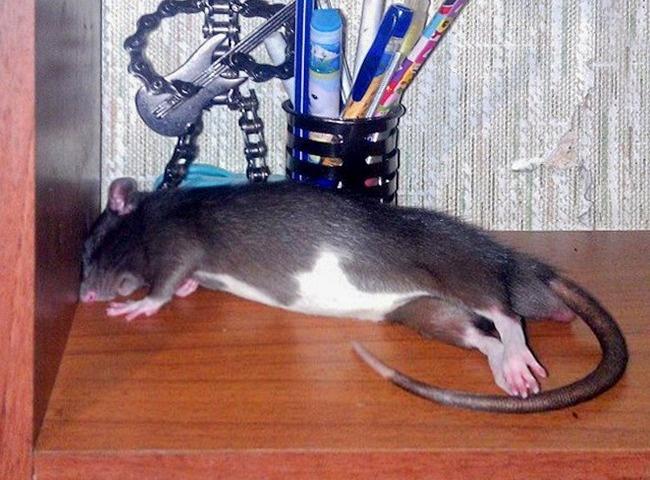 © pikabu      Эта ящерица выглядит так, будто играет насцене Большого