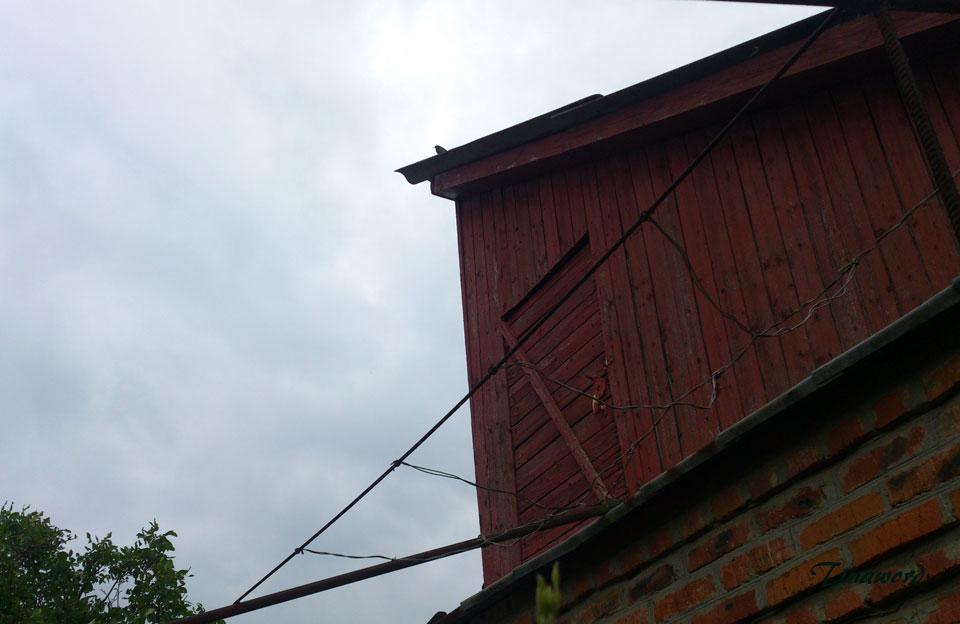 птиц-6.jpg