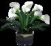 vvs-floral0036.png
