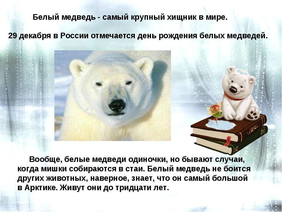 День полярного медведя. Самый большой зверь Арктики