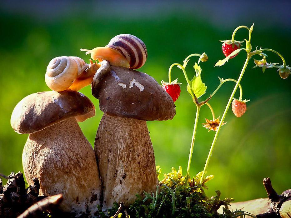 Сказка природы от украинского фотографа Вячеслава Мищенко (17 фото)