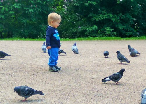 Боря и голуби 2.jpg
