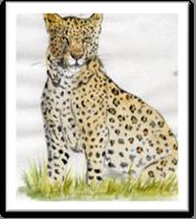 C:\Users\user\Desktop\Сагацких К. к конкурсу о животных\img046.jpg