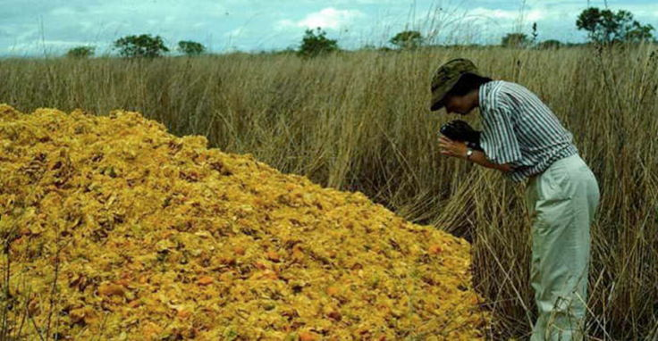 Апельсиновые корки, изменившие мир