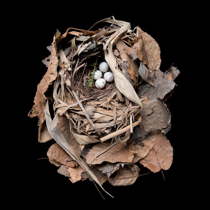 Sharon Beals 20th Century Birds Nest