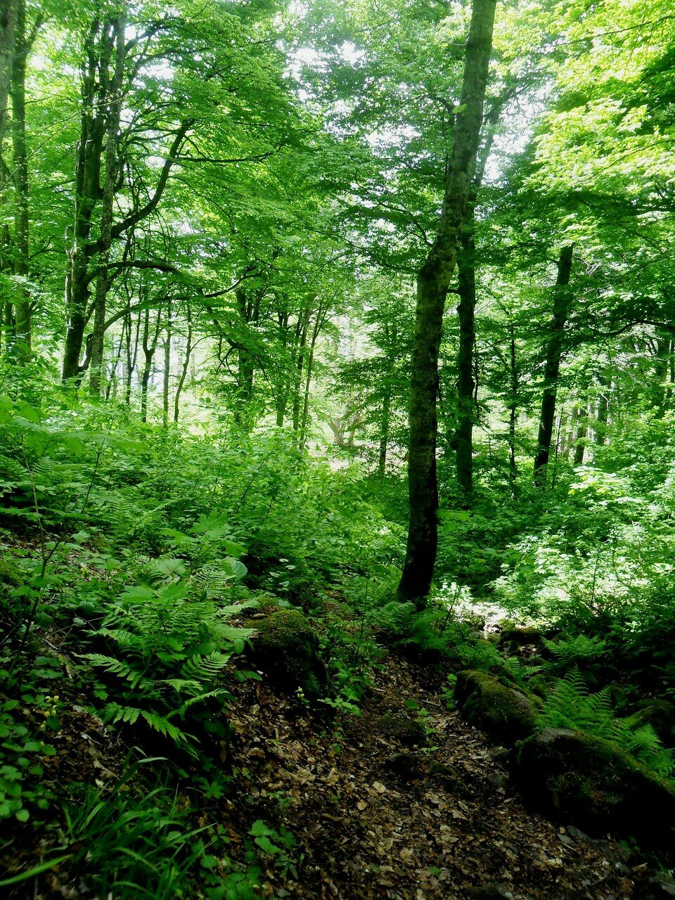 В горах... На тропах лесных, Весна ... SAM_7042.JPG