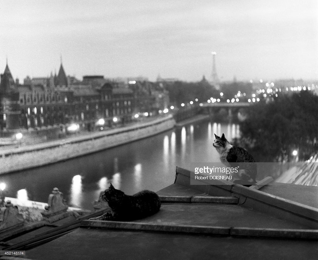 1954. Коты на крыше ночью, Париж