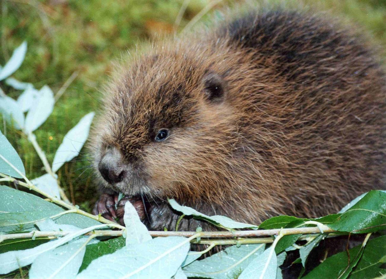 3 марта - Всемирный день дикой природы открытки фото рисунки картинки поздравления