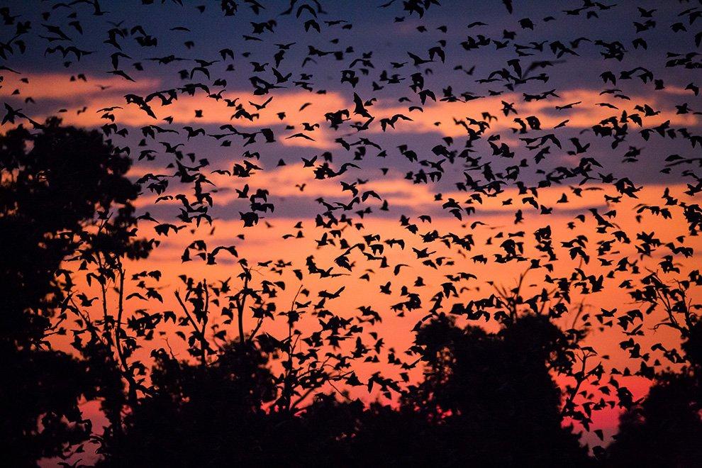 Исследования показали, что летучие мыши способны обнаружить препятствие из проволок на расстоян
