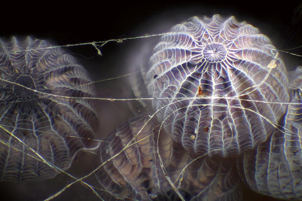 7. Так выглядит соединяющая часть между животом и грудной клеткой муравья при 5-кратном увеличении.